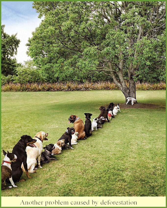 deforestationImage