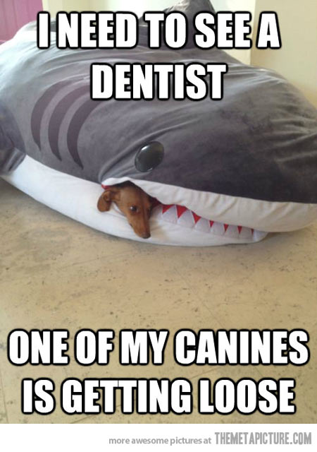 funny-dog-sleeping-toy-shark