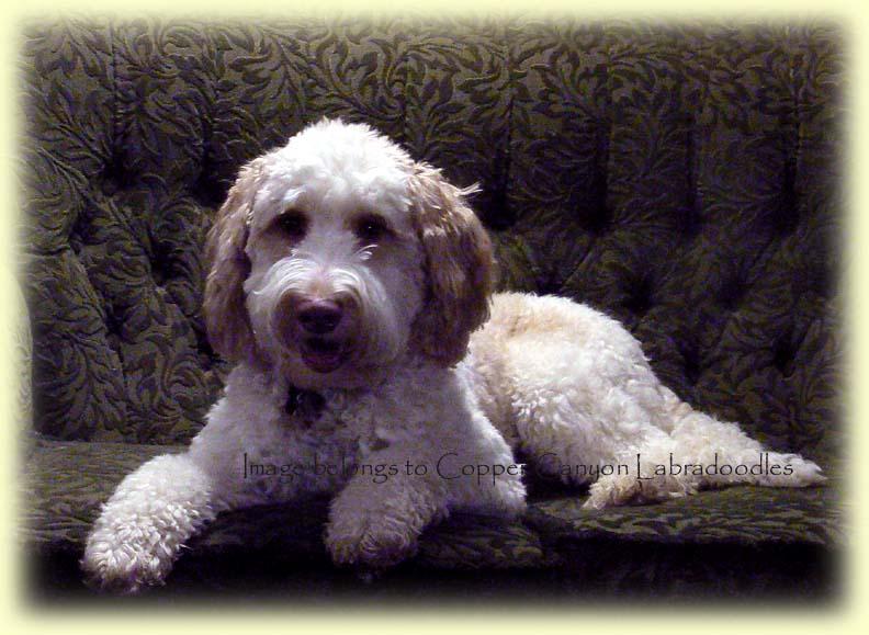 Molly's Major Murphy