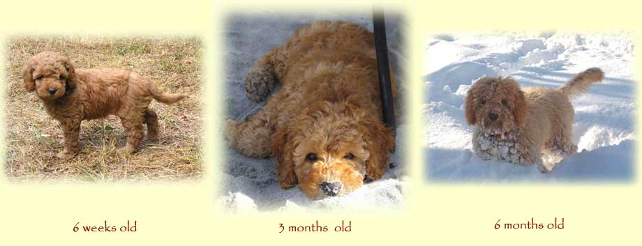 Curly Fleece or Wool Coats