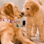 Socializing Your Puppy