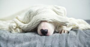 Winter Care for Pets